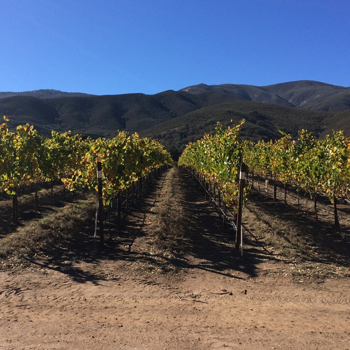 Soledad Vineyard